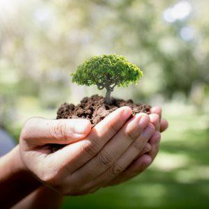 acciones de sostenibilidad en la empresa